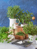 Still life with different fresh culinary herbs