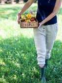 Woman carries box with freshly harvested garden vegetables