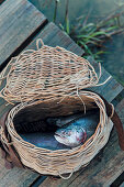 Fresh caught fish in a fishing basket