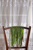 Homemade spinach pasta drying on a wooden chair