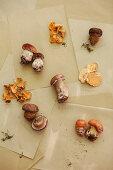 Assorted Wild Mushrooms on Paper Bag
