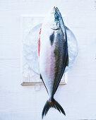A whole tuna on ice