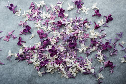 Violette und weiße Fliederblüten auf grauem Untergrund