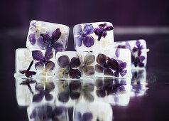 Fliederblüten-Eiswürfel
