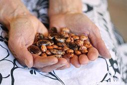 Handful of dried Borlotti bean (variety called Borlotto Lingua di Fuoco) and Runner Beans (Painted Lady)