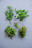 Alpine mint, basil mint, ginger mint and orange mint