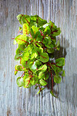 Chard sprouts on a wooden surface