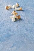 Fresh king trumpet mushrooms