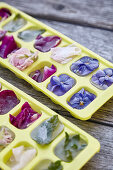 Ice cubes with flower inclusions