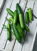 Cucumbers and mini cucumbers