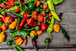 Pepper and chilli variety