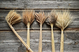 Various ears of wheat (einkorn, spelt, emmer and black emmer)