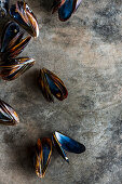 Mussels on concrete surface