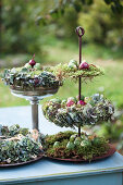 Autumn wreaths made of moss and hydrangea blossoms, Brussels sprouts and onions as decorations