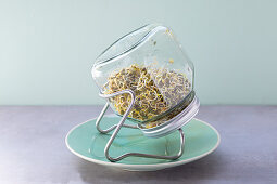 Mountain lentils germinating in a jar of water – jar kept at an angle