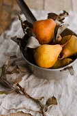 Pears in a metal sieve, with a small branch in the foreground