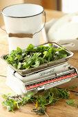 Fresh wild herbs on an old kitchen scale