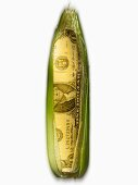 Corn on the cob American dollar bill