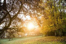 Wiese mit Bäumen an einem Herbsttag, Allgäu, Bayern, Deutschland