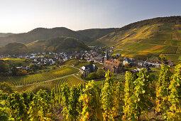 Weinberg bei Mayschoß, Ahrsteig, Rotweinwanderweg, Ahr, Rheinland-Pfalz, Deutschland