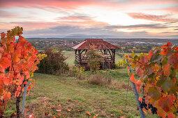 Die Weinhalla bei Sulzfeld im herbstlichen Kleid, Kitzingen, Unterfranken, Franken, Bayern, Deutschland, Europa