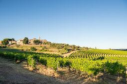 Blick auf San Gusmé, Siena, Toskana und Weinberge, Italien
