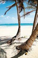 Strand mit Palmen, Meer, Mexiko
