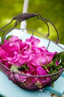 Wild roses in a wire basket
