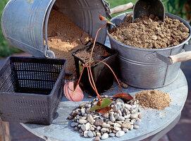 Wasserbottich bepflanzen