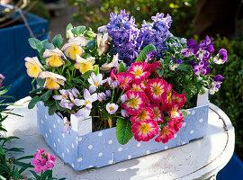 Crocus (Krokussen), Primula (Primeln), Viola (Hornveilchen), Hyacinthus