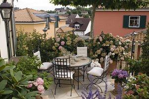 Schattenterrasse mit Hydrangea (Hortensien), Rhododendron (Alpenrose)