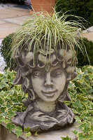 Kopf als Pflanzgefäß für Carex hachijoensis 'Evergold' (Bunt - Segge)
