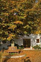 Haus mit Aesculus (Kastanie) als Hausbaum, Bank aus Holz um den Baum