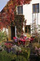 Terrasse an Haus mit Parthenocissus (Wildem Wein) bewachsen