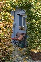 Bank an blaugrauem Gartenhaus