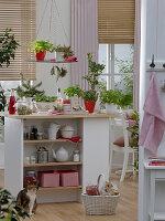 Kräuter und Sprossen in der Küche