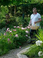 Mann mit Weidenkorb möchte Paeonia (Pfingstrosen) schneiden