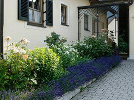 Beet am Hauseingang mit Lavandula (Lavendel), Rosa (Rosen)
