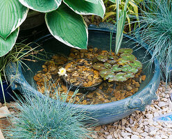 SMALL TURQUOISE Bowl of Water CREATES A MINIATURE POND. with HOSTA, FESTUCA AND NYMPHAEA. GODSTONE GARDENERS CLUB. CHELSEA