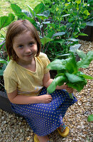 CONNIE HARVESTING SPINACH IN THE CHILDRENS POTAGER