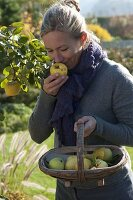 Frau erntet Apfelquitten