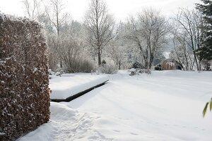 Verschneiter Garten mit Hecke aus Carpinus