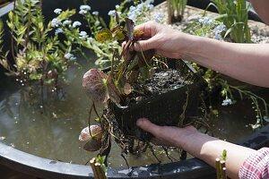 Mini-Teich mit bepflanzter Einfassung aus Weide 7/12