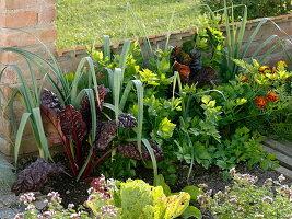 Gemüsebeet mit Porree (Allium porrum), Mangold (Beta vulgaris), Sellerie