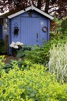 Blaues Gartenhaus hinter Staudenbeet mit Alchemilla (Frauenmantel), Hosta (Funkien) und Phalaris (Reitgras)