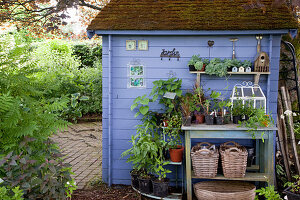 Topftisch und kleine Etagere mit Jungpflanzen am blauen Gartenhaus, Körbe, Werkzeug