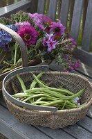 Körbe mit frisch geernteten Bohnen (Phaseolus) und Blumen