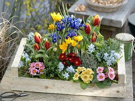 Geschenk-Kiste mit Frühlingsblühern und Kräutern
