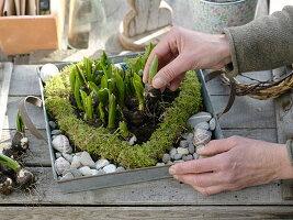 Moos-Herz mit Blausternchen bepflanzen