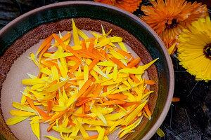 Blütenblätter von Calendula (Ringelblumen) zum trocknen und verarbeiten in Schale